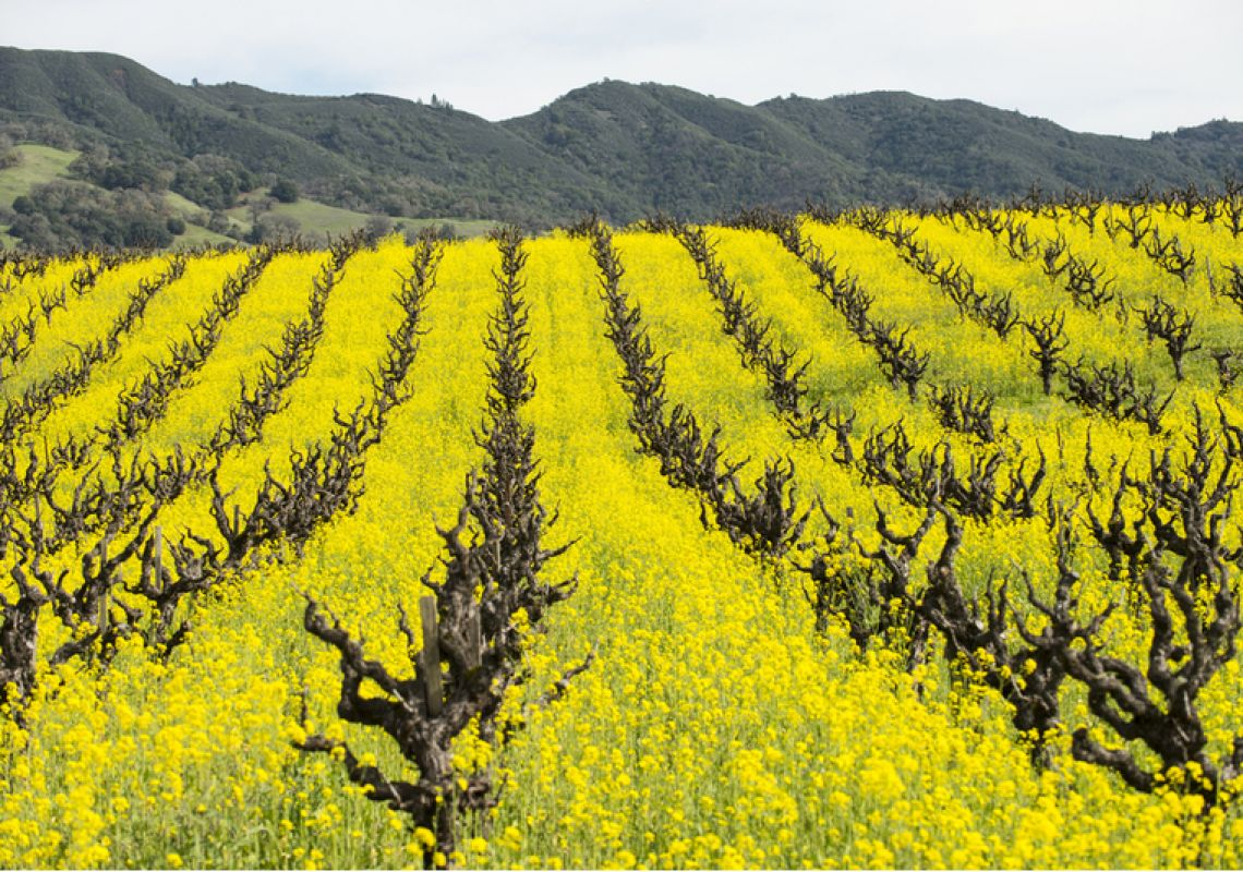 Healthy soil biome and revised strategies key to sustainability and better tasting wine