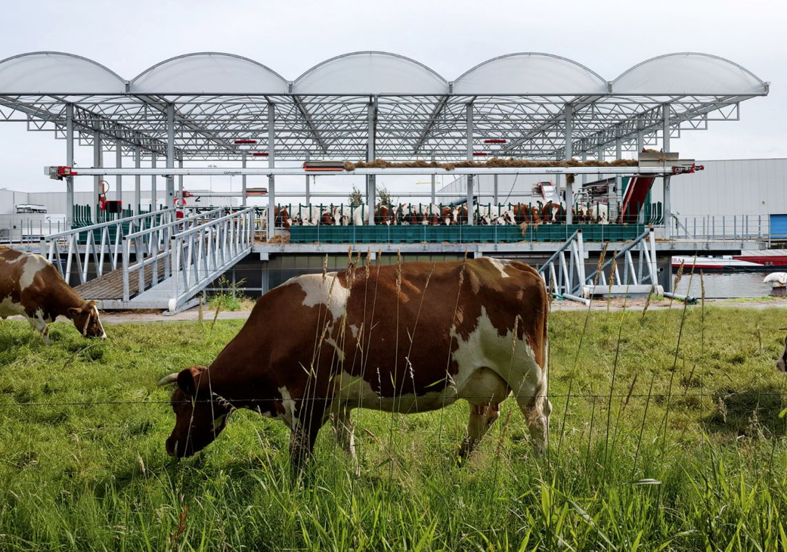 Dutch appetite for dairy fuels remarkable growth
