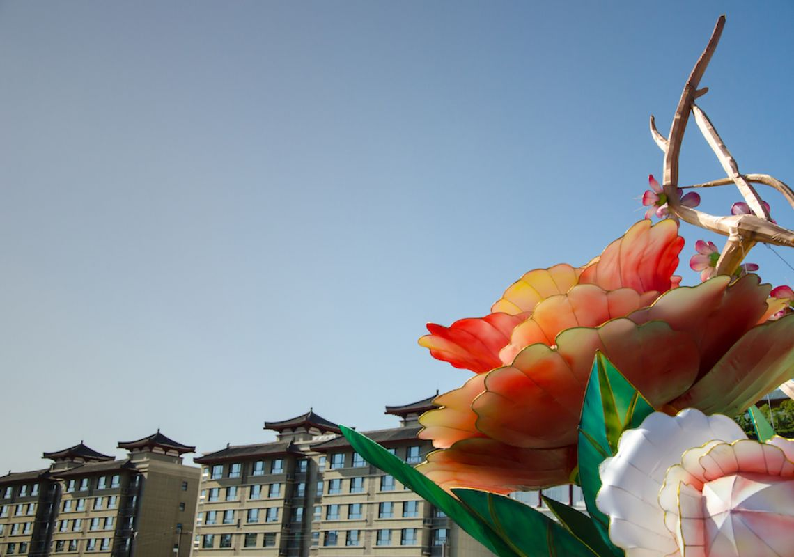 China: New blooms and Reasons for Optimism