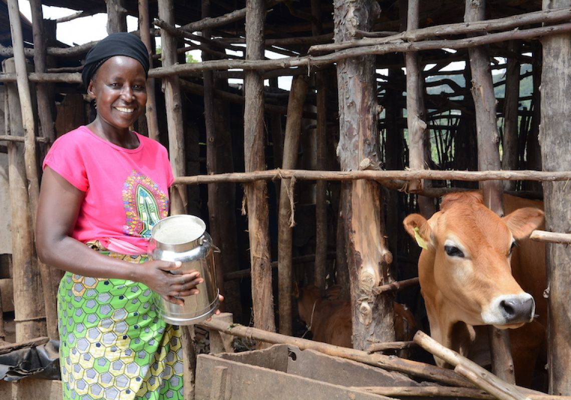 Dairy as a force for good: how Jersey cows are transforming Rwandan communities