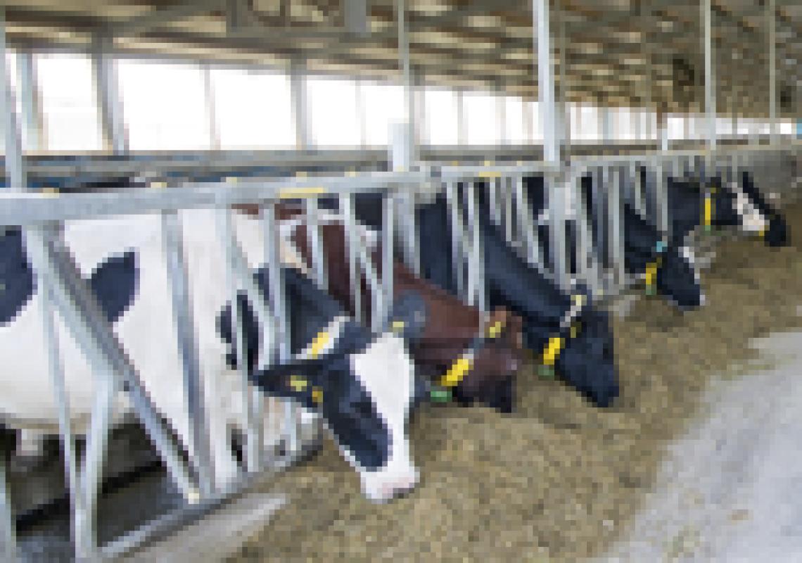 UK dairy industry export opportunities