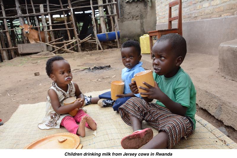 Kids with jersey cow milk rwanda v2